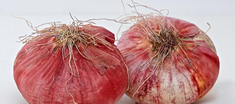 Cipolla Rossa di Acquaviva (Puglia)