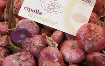 Cipolla di Certaldo (Toscana)